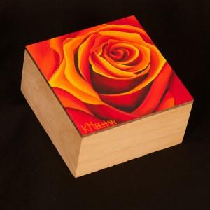 Rose Study 7 in oil by Kerri Meehan
